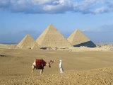 Camel Rider at Giza Pyramids, Giza, Cairo, Egypt, Africa Fotografisk tryk af Nigel Francis