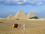 Camel Rider at Giza Pyramids, Giza, Cairo, Egypt, Africa Photographic Print by Nigel Francis