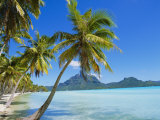 Palm Trees and Beach, Bora Bora, Tahiti, Society Islands, French Polynesia, Pacific Fotografisk tryk af Mark Mawson