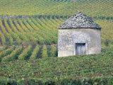 Vineyards, Cote d'Or, Bourgogne (Burgundy), France, Europe Photographic Print by John Miller