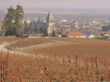 Vineyard, Le Mesnil Sur Oger, France, Europe Photographic Print by John Miller