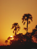 Sunset, Okavango Delta, Botswana, Africa Photographic Print by Paul Allen