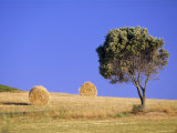 Countryside, Sardinia, Italy, Europe Photographic Print by John Miller