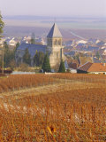 Vineyard, Le Mesnil Sur Oger, Champagne, France, Europe Photographic Print by John Miller
