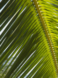 Palm Leaf, Nicoya Pennisula, Costa Rica Photographic Print by Robert Harding