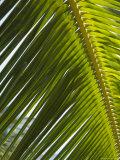 Palm Leaf, Nicoya Pennisula, Costa Rica Photographic Print by Robert Harding