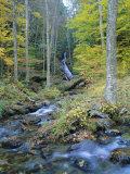 Moss Glen Falls, Green Mountain National Forest, Vermont, USA Photographic Print by Fraser Hall