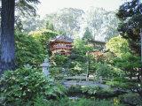 The Japanese Tea Garden, Golden Gate Park, San Francisco, California, USA Photographic Print by Fraser Hall