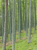 Tree Patterns, Burtness Wood, Lake District, Cumbria, England, UK Photographic Print by Neale Clarke