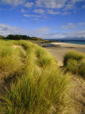 Dunes and Grasses, Mellon Udrigle, Wester Ross, Highlands Region, Scotland, UK, Europe Photographic Print by Neale Clarke