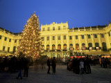 Christmas Tree in Front of Schonbrunn Palace at Dusk, Unesco World Heritage Site, Vienna, Austria Photographic Print by Jean Brooks