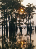 Atchafalaya Swamp, 'Cajun Country', Louisiana, USA Photographic Print by Sylvain Grandadam