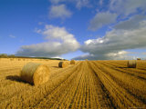 Hay Bales Near Contin, Highlands Region, Scotland, UK, Europe Photographic Print by Neale Clarke