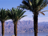 Palm Trees and Red Sea, Eilat, Israel, Middle East Photographic Print by Sylvain Grandadam
