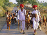 Goatherds, Bijaipur, Rajasthan, India, Asia Photographic Print by Bruno Morandi