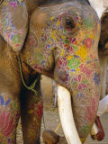 Painted Elephant, Close up of Head, Jaipur, Rajasthan, India Photographic Print by Bruno Morandi