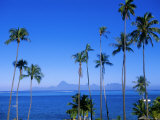 Palm Trees and Island, Tahiti, Society Islands, French Polynesia, South Pacific Islands, Pacific Photographic Print by Sylvain Grandadam