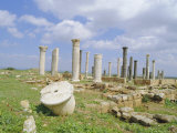 Columns of the 7th/8th Century Byzantine Basilica at Ancient Abila, Jordan Photographic Print by Richard Ashworth