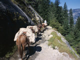 Pack Horses and Tourist Trekking, Merced Valley, Yosemite National Park, California, USA Photographic Print by Lorraine Wilson