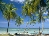 Tropical Landscape of Palm Trees at Pigeon Point on the Island of Tobago, Caribbean Photographic Print by John Miller
