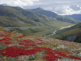 Red Bearberry on Trundra Shelf Above Dalton Highway North of Atigun Pass, Alaska, USA Photographic Print by Anthony Waltham
