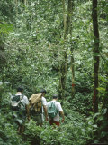 A Small Group of People Trekking Through Primary Rainforest, Island of Borneo, Malaysia Photographic Print by David Poole