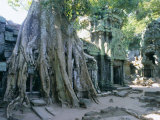 Tree Roots Growing Over Ruins at Archaeological Site, Unesco World Heritage Site, Cambodia Photographic Print by Gavin Hellier