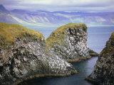 Sea Cliff Nesting Sites in the Columnar Basalt for Sea Birds Such as Kittiwake, Arnarstapi Photographic Print by Pearl Bucknell