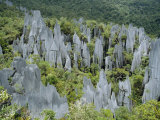 Limestone Pinnacles on Mount Api, Gunung Mulu National Park, Sarawak, Island of Borneo, Malaysia Photographic Print by David Poole