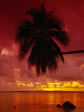 Silhouette of Overhanging Palm Tree, Colourful Sunset, Aitutaki, Cook Islands, Polynesia Photographic Print by D H Webster