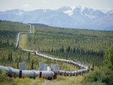 Trans Alaska Oil Pipeline Running on Refridgerated Support to Stop Heat Melting the Permafrost, USA Photographic Print by Anthony Waltham