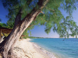 Leaning Tree Above Calm Turquoise Sea, Seven Mile Beach, Grand Cayman, Cayman Islands, West Indies Photographic Print by Ruth Tomlinson