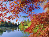 Sheffield Park Garden, the Middle Lake Framed by Scarlet Acer Leaves, Autumn, East Sussex, England Photographic Print by Ruth Tomlinson