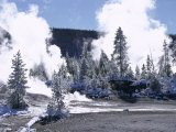 Geothermal Steam, Frosted Trees and Snow-Free Hot Ground in Norris Basin in Winter, Wyoming, USA Photographic Print by Anthony Waltham