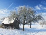 Barn and Apple Trees in Winter, Weigheim, Baden-Wurttemberg, Germany, Europe Photographic Print by Jochen Schlenker