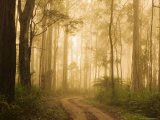 Country Road in Fog, Dandenong Ranges, Victoria, Australia, Pacific Photographic Print by Jochen Schlenker