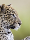 Leopard (Panthera Pardus), Samburu National Reserve, Kenya, East Africa, Africa Photographic Print by James Hager