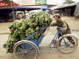 Man Transporting Bananas on Cyclo, Hue, Vietnam, Indochina, Southeast Asia, Asia Photographic Print by Colin Brynn
