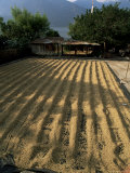 Coffee Beans Drying in the Sun, San Pedro, Atitlan Lake, Guatemala, Central America Photographic Print by Aaron McCoy