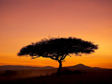 Acacia Tree Silhouetted at Dawn, Masai Mara Game Reserve, Kenya, East Africa, Africa Fotografie-Druck von James Hager