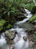 Stream Through Rainforest, Lewis Pass, South Island, New Zealand, Pacific Photographic Print by James Hager