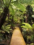 Boardwalk Through Rainforest, Maits Rest, Great Otway National Park, Victoria, Australia, Pacific Fotografisk tryk af Jochen Schlenker