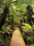 Boardwalk Through Rainforest, Maits Rest, Great Otway National Park, Victoria, Australia, Pacific Photographic Print by Jochen Schlenker