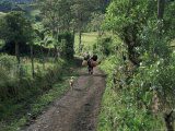 Dog Leads the Way for Donkey and Keeper, Near Cotopaxi Volcano, Ecuador, South America Photographic Print by Aaron McCoy