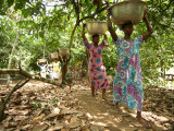 Cocoa Producing Village, Kumasi, Ghana, West Africa, Africa Photographic Print by Ali Mobasser