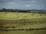 Farmland Near Willunga, Fleurieu Peninsula, South of Adelaide, South Australia, Australia, Pacific Photographic Print by Robert Francis