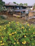Stilt Houses on the Rejang River, Sarikei, North West Borneo, Sarawak, Malaysia Photographic Print by Robert Francis