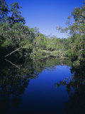 Everglades, Noosa, Queensland, Australia Photographic Print by Rob Mcleod