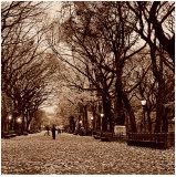 Central Park Affiches par Sasha Gleyzer