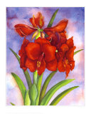 Amaryllis Posters by Jane Edwards